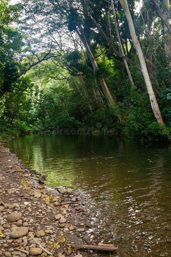Piccolo fiume su Kauai fotografie stock