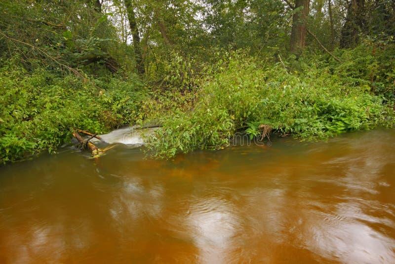 Piccolo flusso del fiume fra la foresta ombreggiata fotografie stock