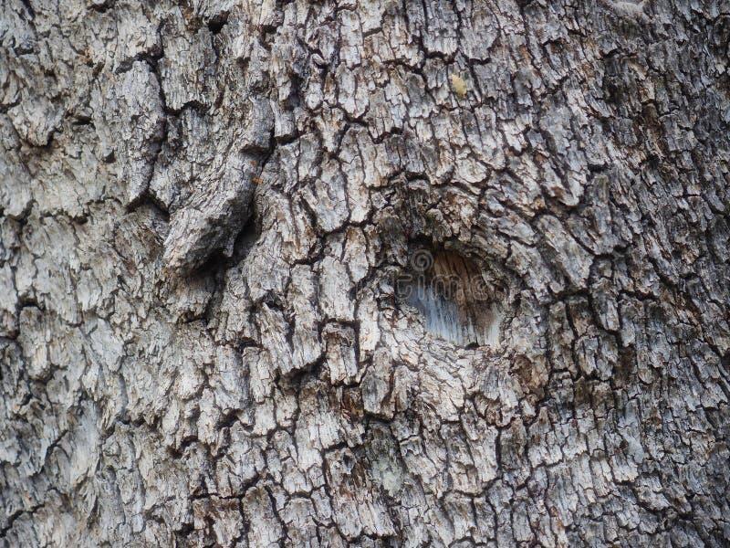Piccolo foro di nodo nella corteccia di quercia strutturata fotografia stock libera da diritti