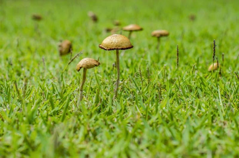 Piccolo fungo sulle erbe immagini stock libere da diritti