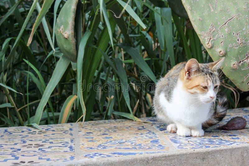 Piccolo gattino fotografia stock libera da diritti