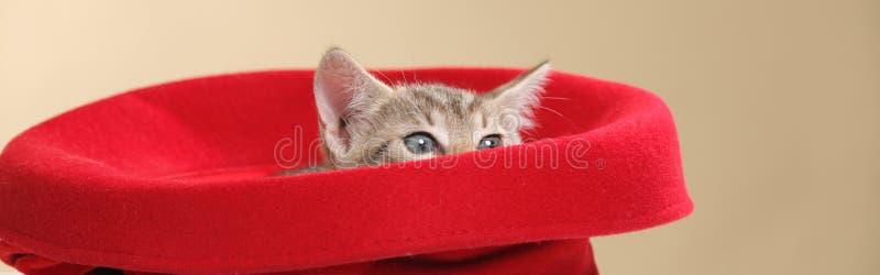 Piccolo gattino fotografia stock