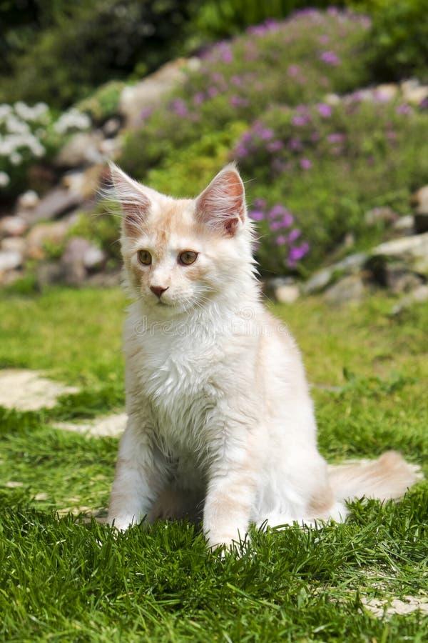 Piccolo gattino che si siede nel giardino fotografie stock libere da diritti