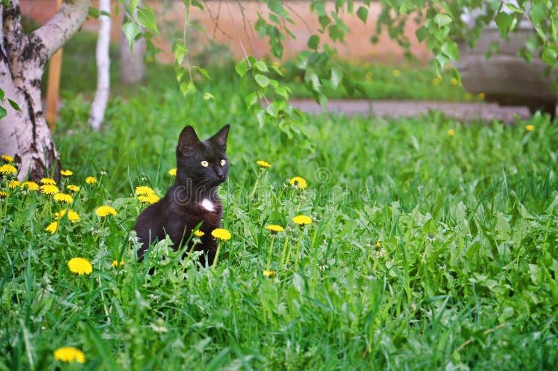Piccolo gattino che si siede nell'erba fotografia stock