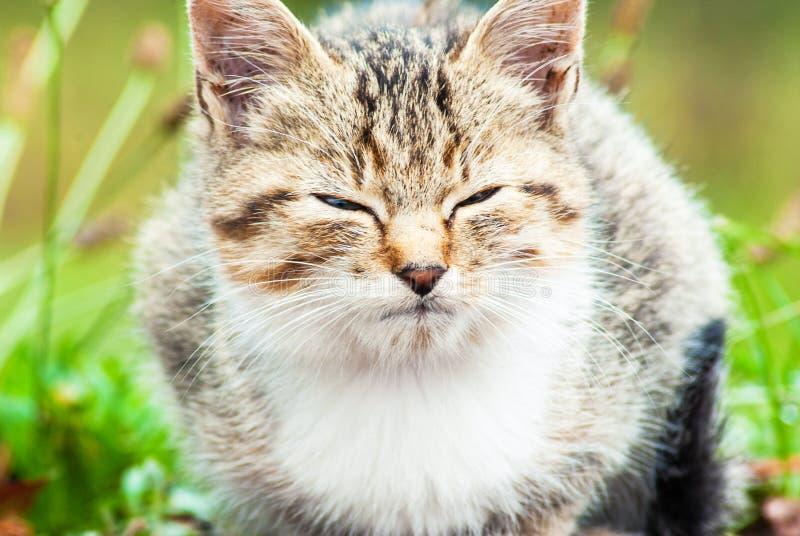 Piccolo gattino che si siede sull'erba fotografie stock libere da diritti