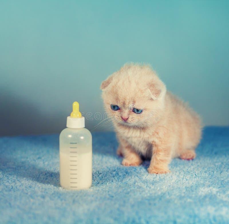 Gattino Neonato Piccolo D'alimentazione Con Il Succedaneo