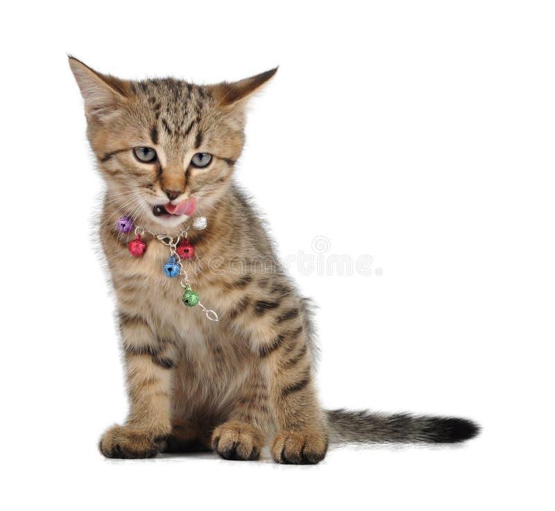 Piccolo gattino con la lingua fuori fotografie stock