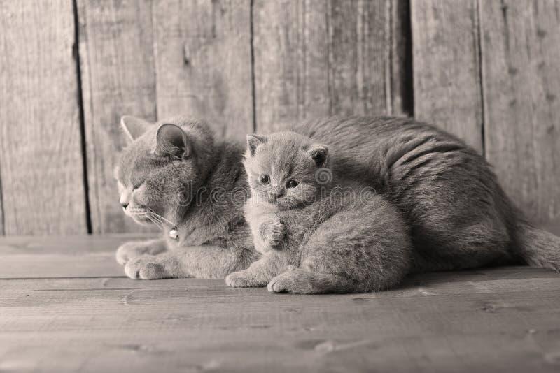 Piccolo gattino con la mamma, ritratto immagine stock