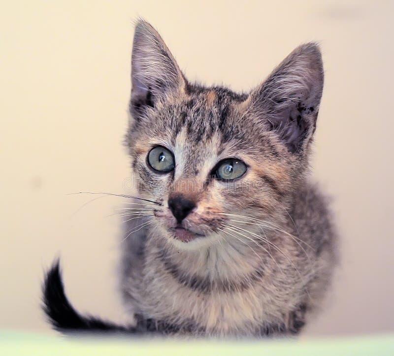 Piccolo gattino con un labbro rotto fotografie stock