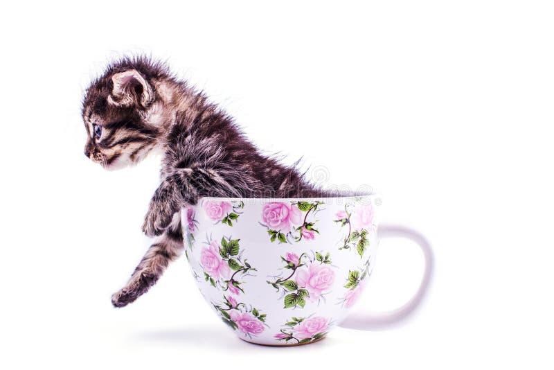 Piccolo gattino del soriano in una grande tazza bianca immagine stock