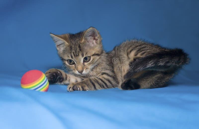 Piccolo gattino del tabby fotografie stock libere da diritti