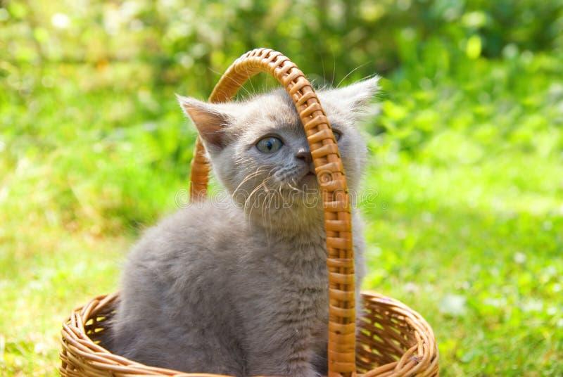 Piccolo gattino divertente fotografia stock libera da diritti