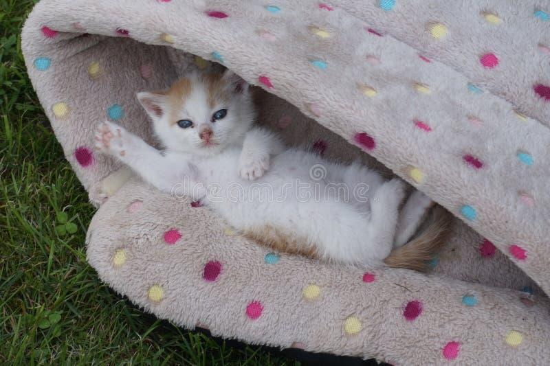 Piccolo gattino dolce completamente si è rilassato in un canestro fotografie stock libere da diritti