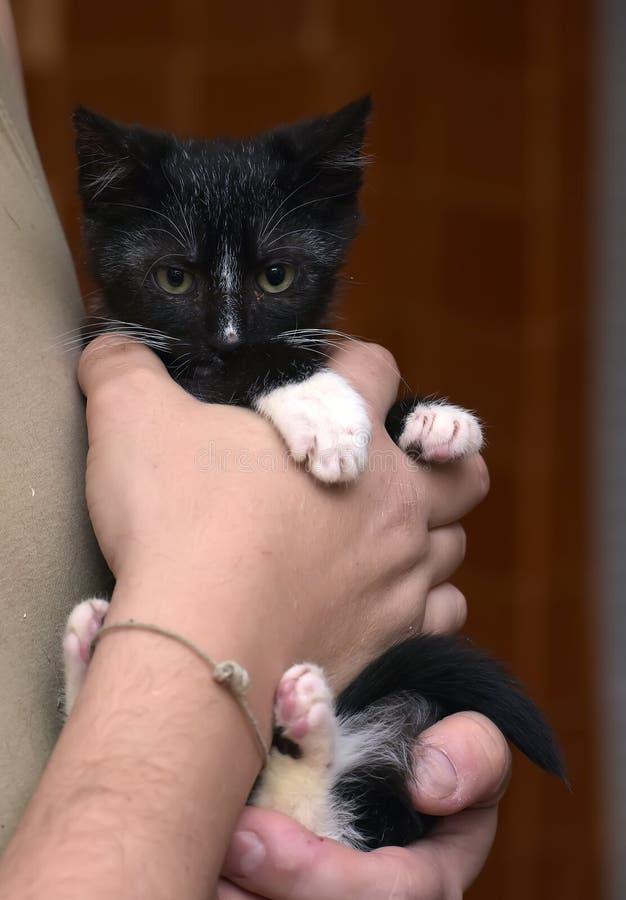 Piccolo gattino domestico in bianco e nero sveglio immagini stock libere da diritti