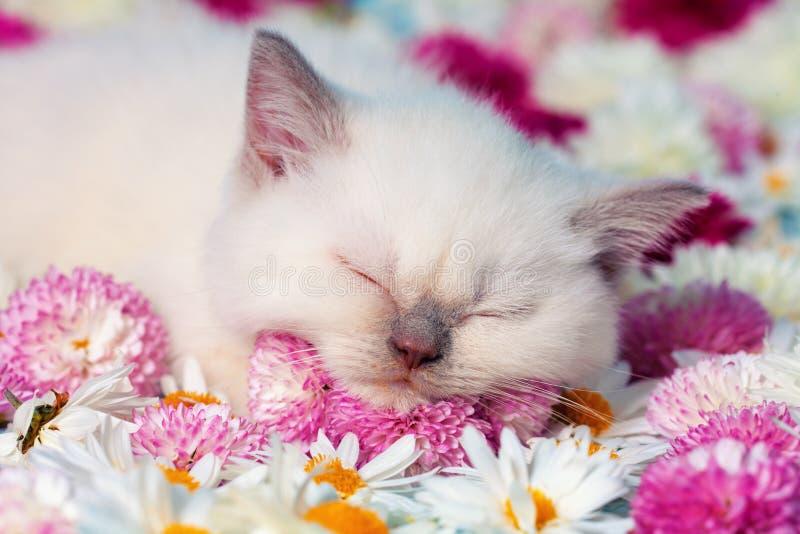 Piccolo gattino in fiori immagine stock