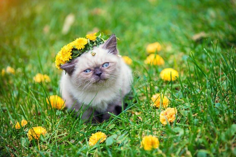 Piccolo gattino incoronato con la corona del fiore fotografie stock