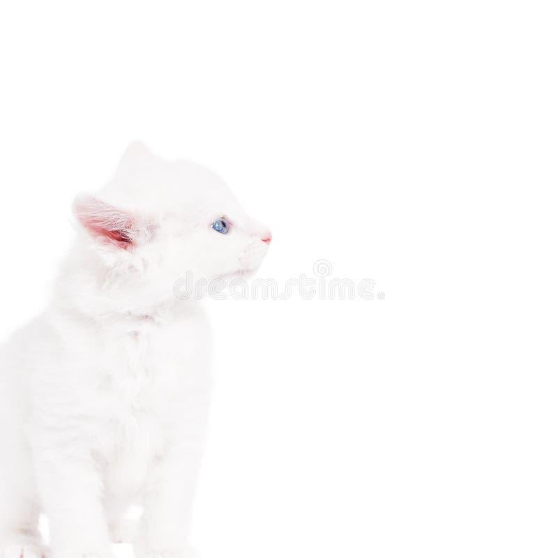 Piccolo gattino lanuginoso fotografie stock