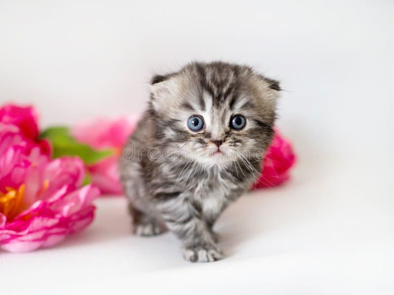 Piccolo gattino lanuginoso su un fondo bianco con i fiori fotografie stock libere da diritti