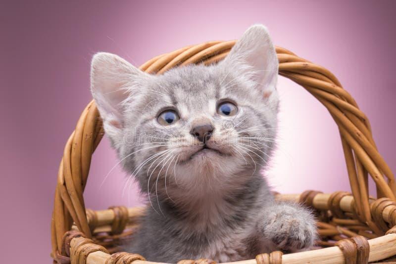 Piccolo gattino nel cestino immagine stock