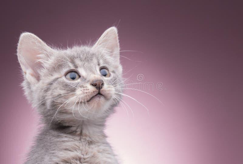 Piccolo gattino nel cestino immagine stock libera da diritti