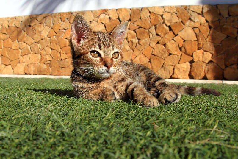 Piccolo gattino nel giardino fotografia stock libera da diritti