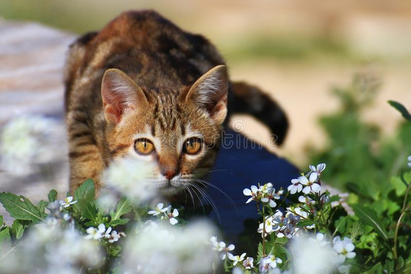 Piccolo gattino nel giardino fotografie stock libere da diritti