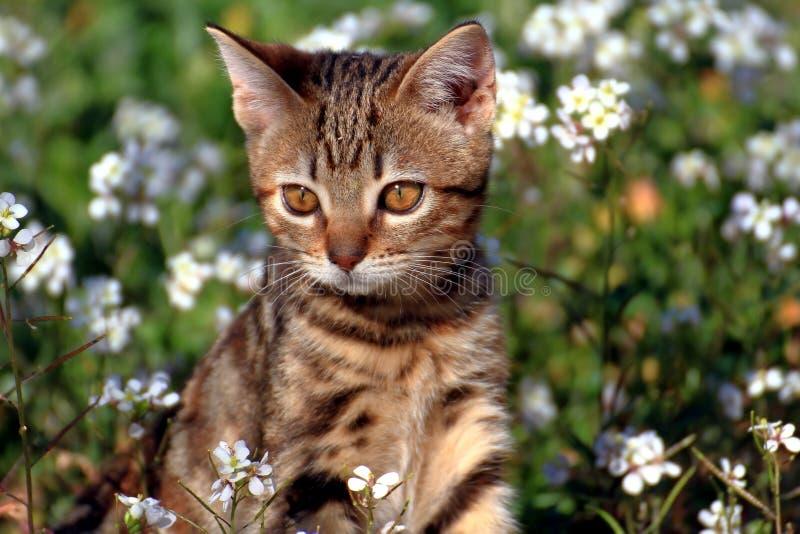 Piccolo gattino nel giardino immagine stock