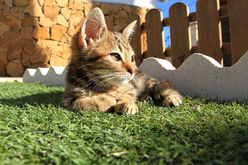 Piccolo gattino nel giardino fotografie stock