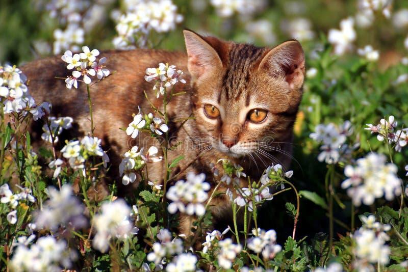 Piccolo gattino nel giardino immagini stock