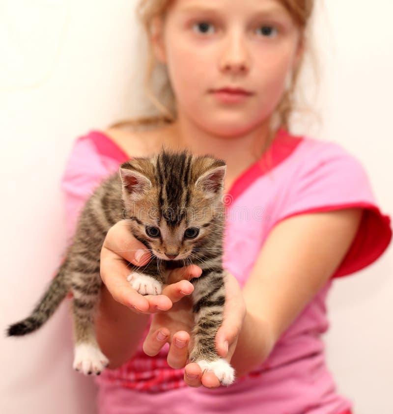 Piccolo gattino nelle mani delle ragazze fotografia stock libera da diritti