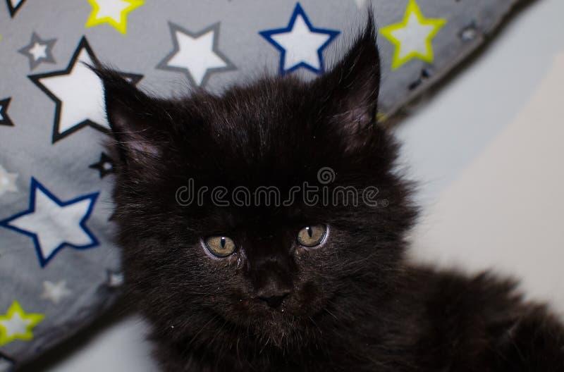 Piccolo gattino nero fotografia stock libera da diritti