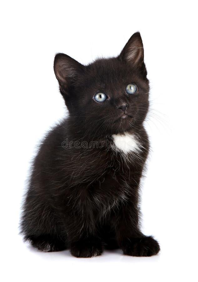 Download Piccolo gattino nero. immagine stock. Immagine di nero - 30826447