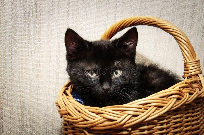 Piccolo gattino nero a casa fotografia stock libera da diritti