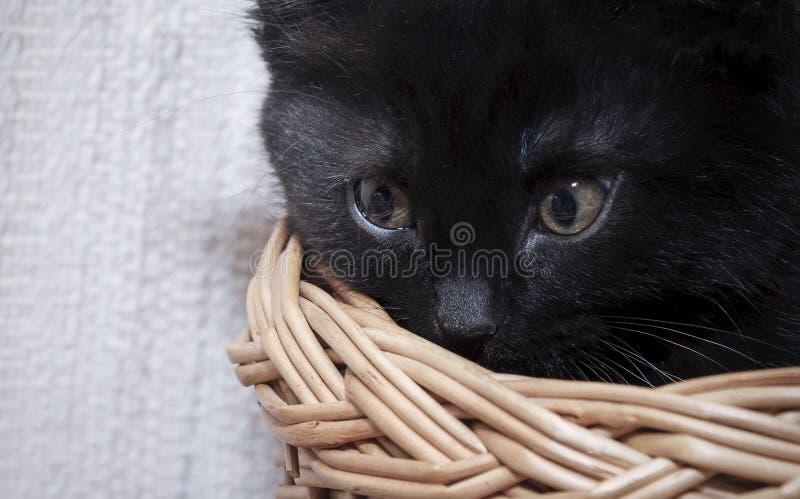 Piccolo gattino nero a casa fotografie stock