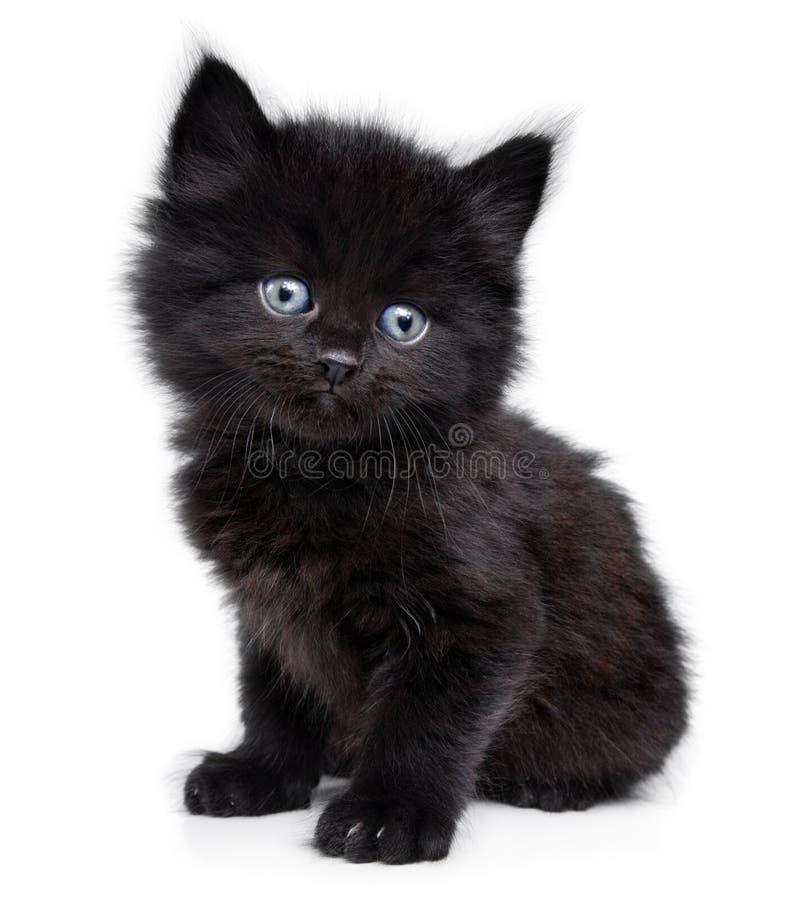 Piccolo gattino nero che si siede fotografie stock libere da diritti