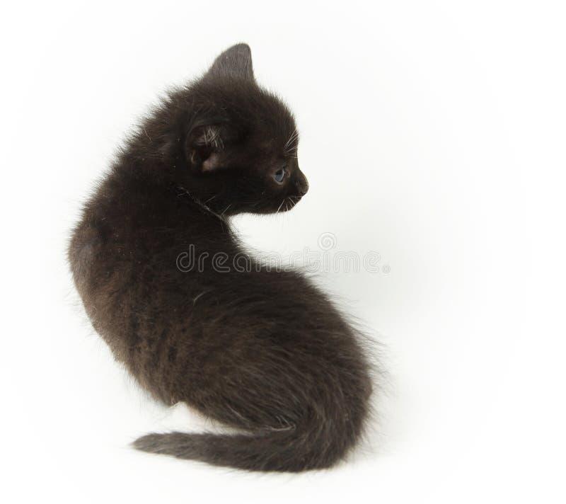 Piccolo gattino nero in modo divertente immagini stock libere da diritti