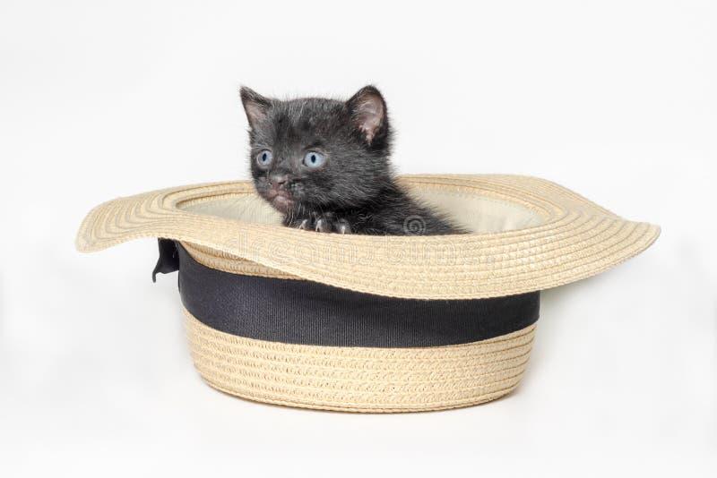 Piccolo gattino nero sveglio che si siede in un cappello isolato su una fine bianca del fondo su fotografia stock libera da diritti