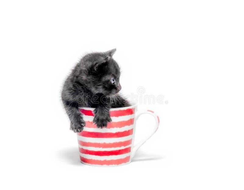 Piccolo gattino nero sveglio che si siede in una tazza isolata sulla fine bianca del fondo su fotografie stock libere da diritti