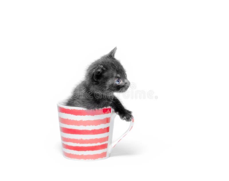 Piccolo gattino nero sveglio che si siede in una tazza isolata sulla fine bianca del fondo su immagini stock libere da diritti