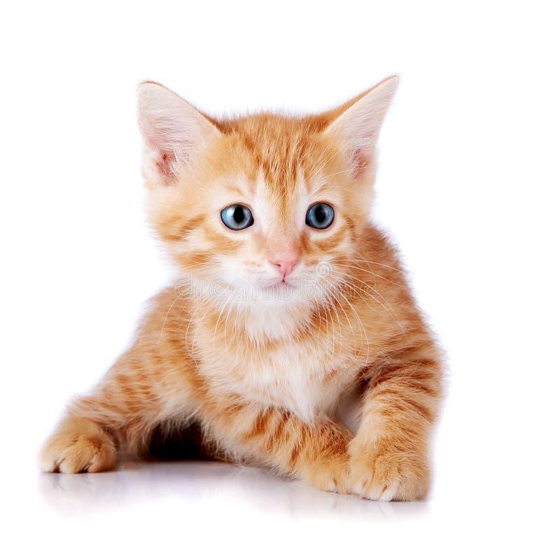 Download Piccolo gattino rosso. fotografia stock. Immagine di arancione - 30825648