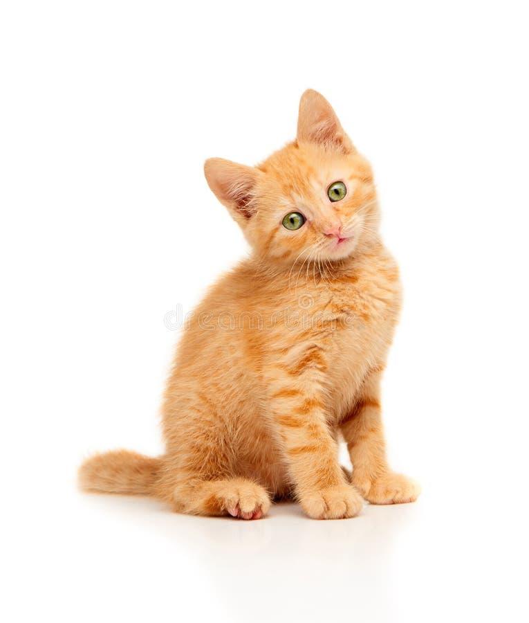 Piccolo gattino rosso sveglio che si siede e che esamina diritto la macchina fotografica immagine stock