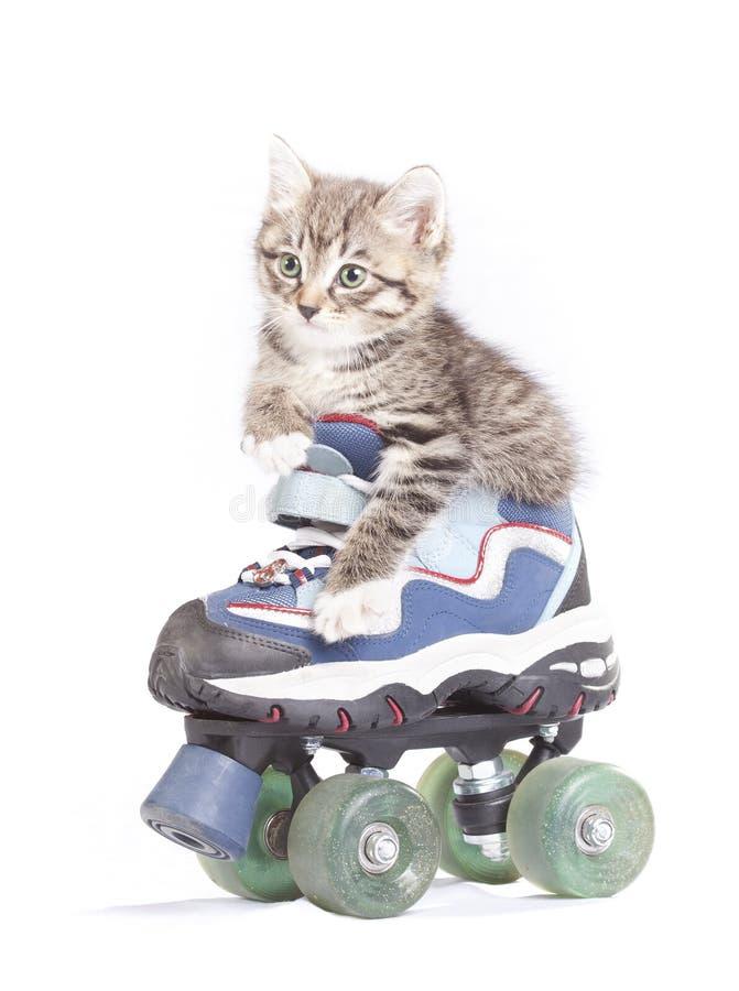 Piccolo gattino sui pattini di rullo. fotografia stock