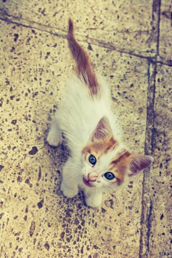 Piccolo gattino sveglio bianco ed arancio su superficie rocciosa su esposizione fotografie stock