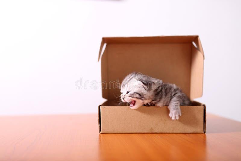 Piccolo gattino in una scatola di cartone fotografia stock