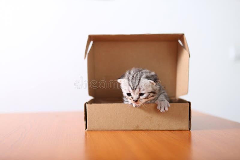 Piccolo gattino in una scatola di cartone fotografie stock