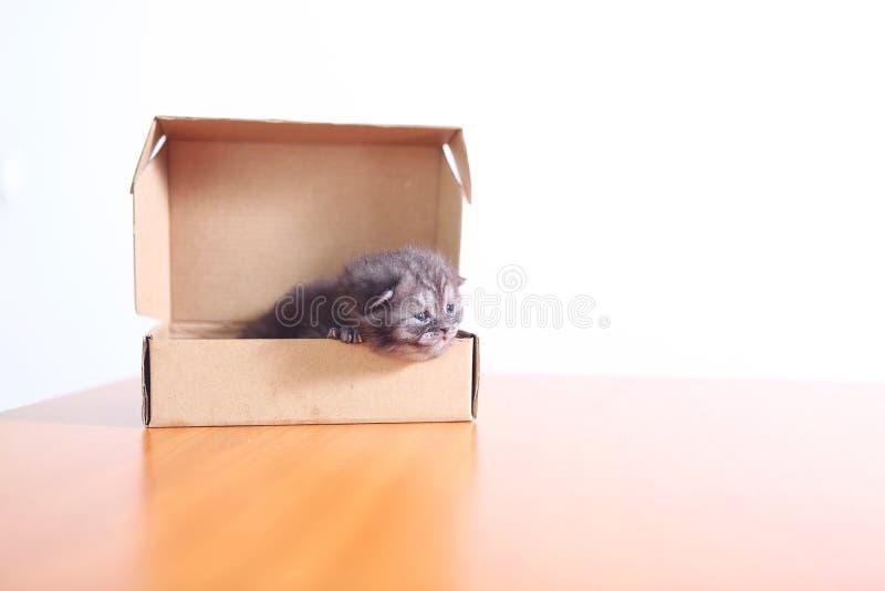 Piccolo gattino in una scatola di cartone fotografie stock libere da diritti