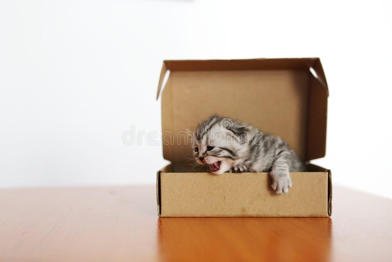 Piccolo gattino in una scatola di cartone immagini stock