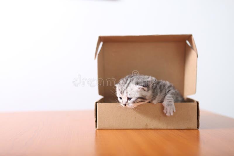 Piccolo gattino in una scatola di cartone immagini stock libere da diritti