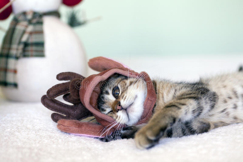 Piccolo gatto fotografia stock