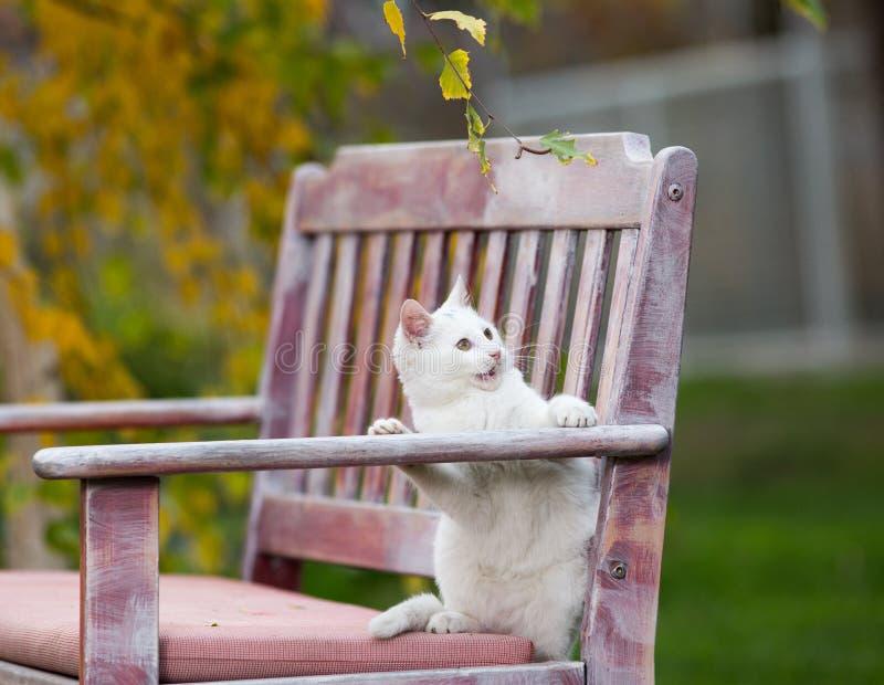 Piccolo gatto bianco che gioca nel giardino immagine stock libera da diritti